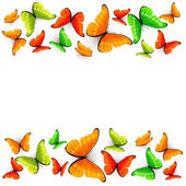 Colorful butterflies on white background — Stock Vector