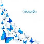 Modré a bílé motýli — Stock vektor