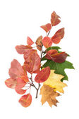 Autumn leaves and one twig — Stock Photo