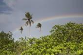 Molnig himmel och regnbåge över tropiska buskar och palmer — Stockfoto