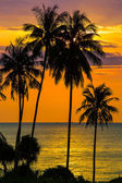 Palm tree silhouette at sunset, Thailand — Stock Photo