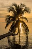 Coconut palm tree silhouette at sunset. Koh Phangan island, Thailand — Stock Photo