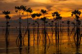 Mangroves on the island of Koh Phangan during sunset, Thailand — Stock Photo
