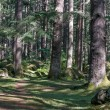 Beautiful pine forest in Manali, Himachal Pradesh, India — Stock Photo #70076563