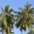 Coconut palm tree and blue sky in Thailand — Stock Photo #70105279