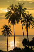 Coconut palm tree silhouette at sunset in Thailand — Stock Photo