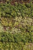 Decorative wall of plants — Stock Photo