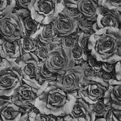 Roses background in black and white — Stock Photo