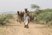 Indian nomad attended the annual Pushkar Camel Mela — Stock Photo