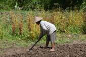 Old woman farmer holding spade at field. Bali, Indonesia. — Stock Photo