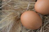 Ver huevos marrones en la parte superior de hierba seca — Foto de Stock