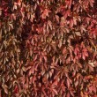 Red leaves over a wall — Stock Photo #54794353