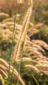 Close up image of yellow wild grass flowers — Stock Photo