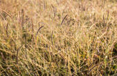 Fresh grass blurry background as morning sunlight — Stock Photo