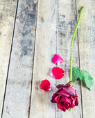 Fresh red rose on wooden background. — Stock Photo