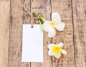 White Card and Plumeria flower on wooden — Stock Photo