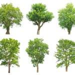 bomen collectie geïsoleerd op witte achtergrond — Stockfoto #75691667