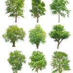bomen collectie geïsoleerd op witte achtergrond — Stockfoto #75692607