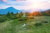 Sunset in mountain — Stock Photo