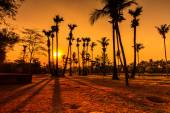 Coconut Tree Silhouettes — Stock Photo