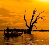 Dead tree and a boat — Stockfoto