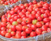 Lots of tomatoes — Stock Photo