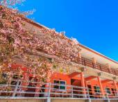 Cherry blossom in front of hotel — Stockfoto
