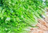 Fresh green coriander — Stock Photo