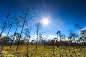 Árbol muerto paisaje contra el sol en el Parque Nacional Phukradung — Foto de Stock