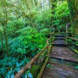 Passage in the primeval forest — Stock Photo #55571049