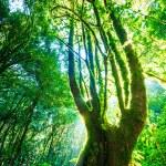 Green forest sunlight — Stok fotoğraf #55596889