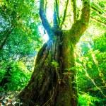 Green forest sunlight — Stok fotoğraf #55597169