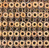 бамбуковый зонтик — Стоковое фото