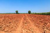Land with soil preparation — Stock Photo
