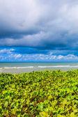 Sea sand beach in sunny day — Stockfoto