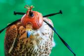 A Red-tailed hawk ( — 图库照片