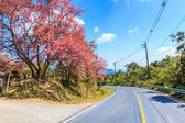 Cherry Blossom and sakura tree — Stock fotografie
