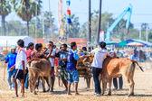 第 143 牛祭りをレース — ストック写真