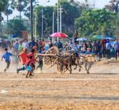 Скачки фестиваль 143 коровы — Стоковое фото