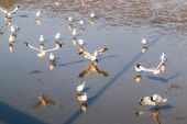 Seagull is a bird migration — Stock Photo