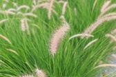 Reeds of grass — Stock Photo