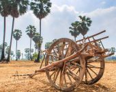 Buckboard in the field — Stock Photo