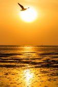 Beautiful sunset above the sea — ストック写真