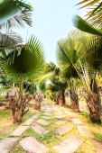Palm Plantation and way — Stock Photo