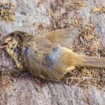Dead bird — Stock Photo #56211041