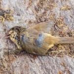 Dead bird — Stock Photo #56211047