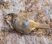 Pájaro muerto — Foto de Stock