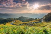 Landscape  in Tung Bua Tong — Stock Photo