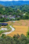 Paddy views  in Chiang Mai — Foto Stock