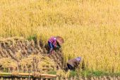 Thailand Farmers in Maehongson Province — Stockfoto